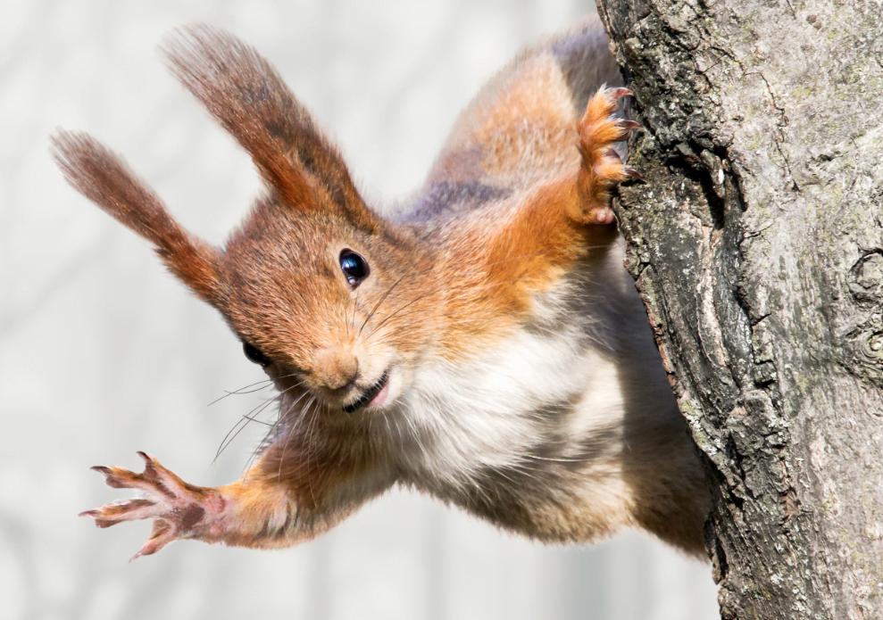Squirrelmail blir fjernet fra cPanel